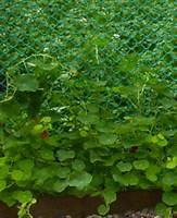 Сетка садовая пластиковая от компании «ПОЛИМЕР ТОРГ»