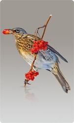 Сетка от птиц
